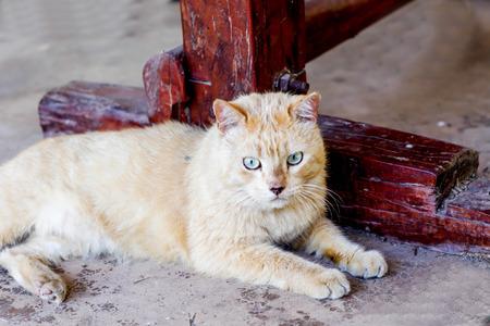 The cute cat