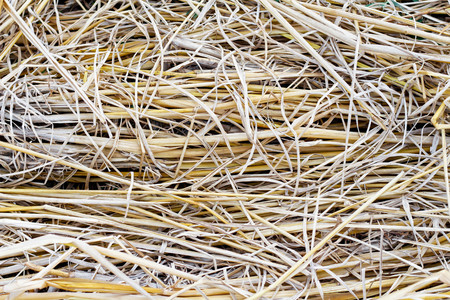 residue: rice straw background Stock Photo