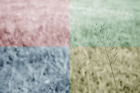 grass  flowers: grass flowers with Quadrant Colors Stock Photo