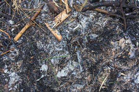 la quemada: Las hojas secas y ramas se queman