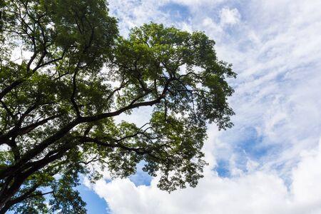 bid: ramita de árbol oferta en el fondo del cielo