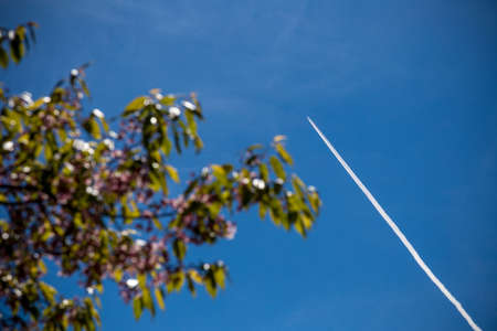 contrail: airplane contrail with blurred tree on sky background Stock Photo