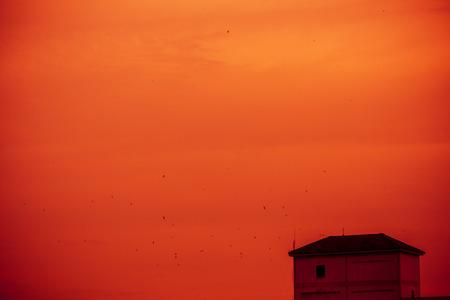 tragos: Las golondrinas volaban alrededor del edificio para mascotas