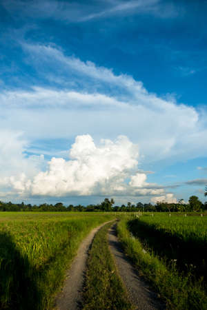 path way in rice field with sky rural scene