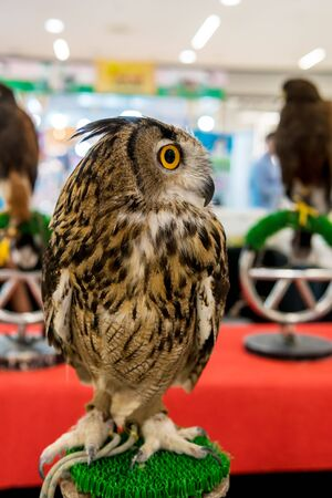 The owl sat on the pedestal which was shown in the mall.