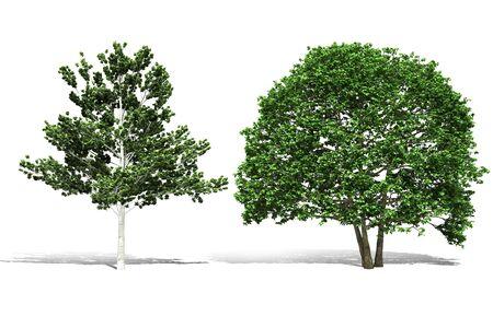 3d tree render on white background Banco de Imagens