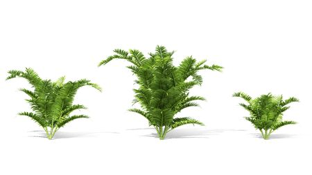 3d tree render on white background Stock fotó - 87234013