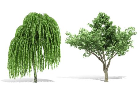 3d tree render on white background Banco de Imagens - 87234014