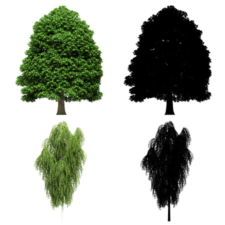 3d tree rendering on white background Banco de Imagens - 87234019