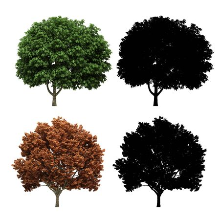 3d tree rendering on white background Stock fotó - 87149718