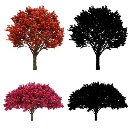 3d tree rendering on white background Stock fotó - 87149719