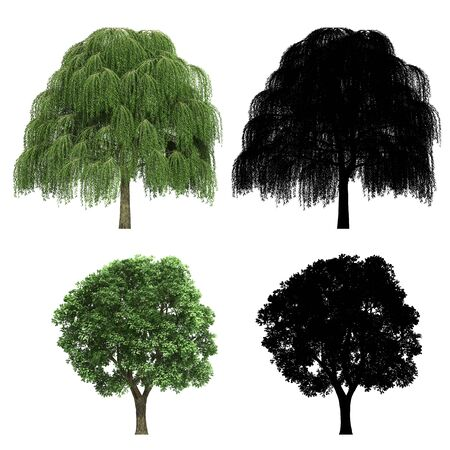 3d tree rendering on white background Stock fotó
