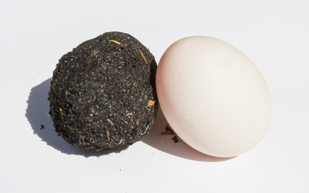 black soil: Salted Egg are plastered with black soil and salted egg are washed black soil out. Stock Photo