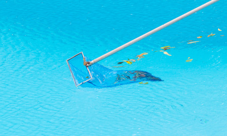 Cleaning swimming pool of fall leaves photo