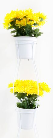 Fake flower, Yellow daisies in white pots at stand on white background