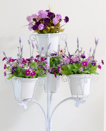 Violet flower in white four flower pots decoration on white wall background.