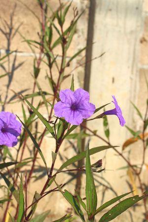 Grass beside the flowers, purple flowers. Stock Photo