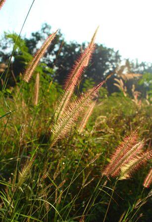 Beautiful grass Stock Photo