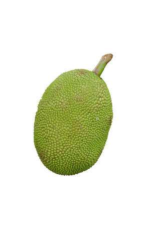 An green jackfruit  photo