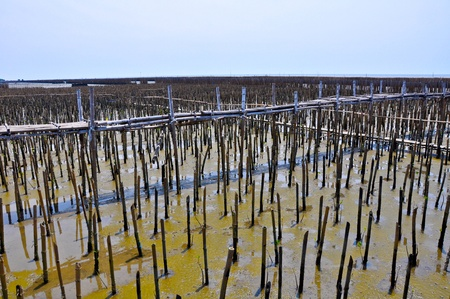 Bamboo dam and Mangrove farm  photo