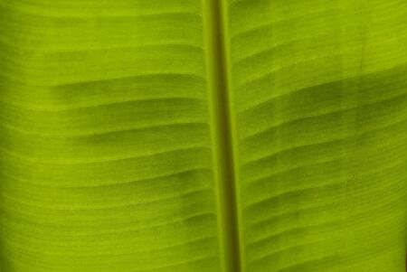 leaf texture  Stock Photo - 13803082