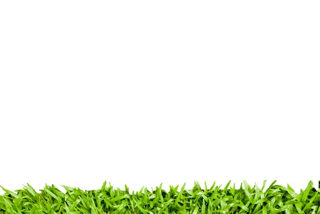 fresh spring green grass isolated on white background Stock Photo - 14190935
