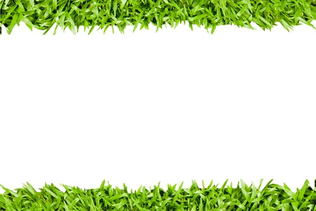fresh spring green grass isolated on white background  Stock Photo - 14190940