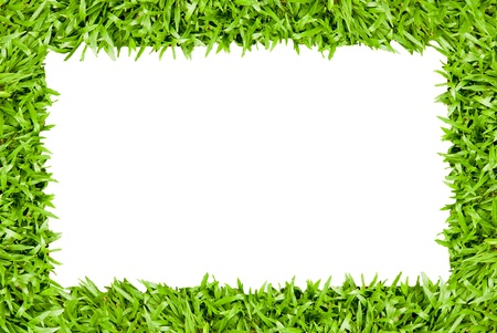 fresh spring green grass isolated on white background  Stock Photo - 14190941
