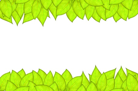 leafs abstract background with place for your text Stock Photo - 14190959