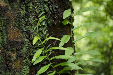plant on tree Stock Photo - 14289871