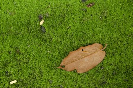 Green lichen  Stock Photo - 14289906