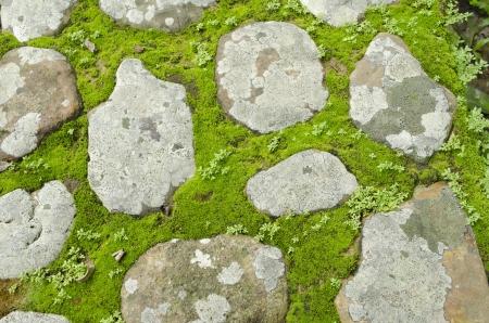 Green moss grows between bricks on pathway Stock Photo - 14289912
