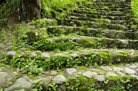 Green moss grows between bricks on pathway Stock Photo - 14289909