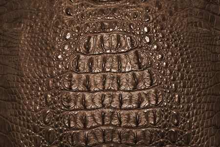 Freshwater crocodile bone skin texture background