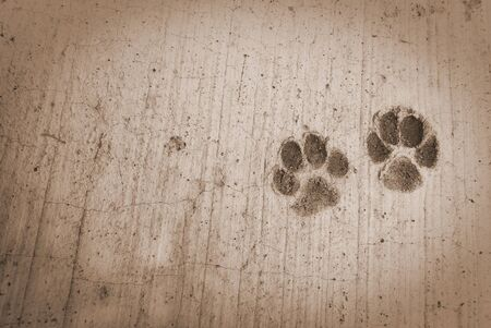 foot dog prints on a cement Stock Photo