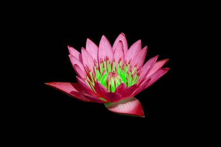 water lilly on water background with leaves and it s bud Stock Photo - 16232118