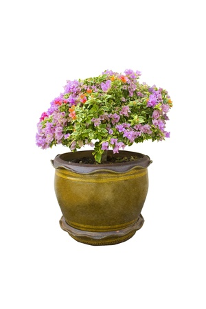 plant in a pot isolated on white background Stock Photo - 16261651