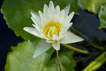 Beauty water lilly flower Stock Photo - 16261645