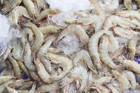 deep freeze: Fresh Shrimp or Prawn Lay on Ice.