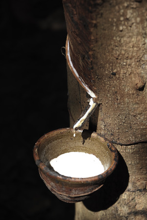 wood agricultural: Milky latex extracted from rubber tree