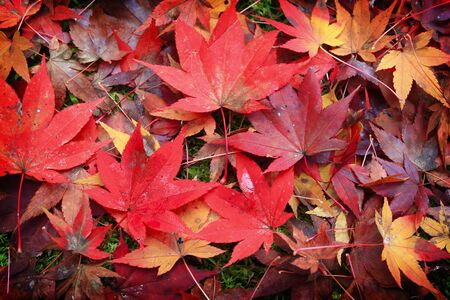 紅葉と秋の背景 写真素材 - 69675401