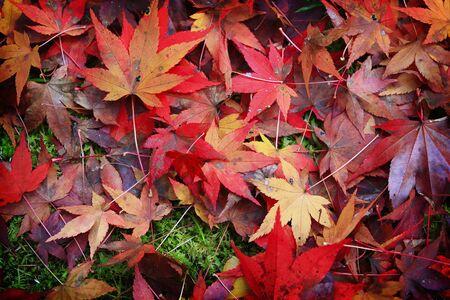 紅葉と秋の背景 写真素材 - 69675403