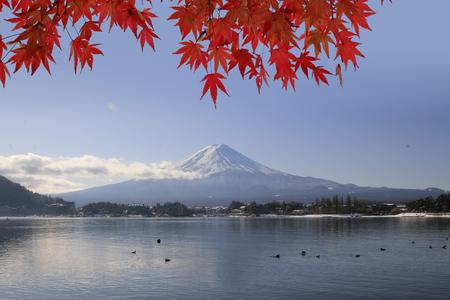 白い背景に分離された日本の赤秋のメープル ツリーの葉 (イロハモミジ)