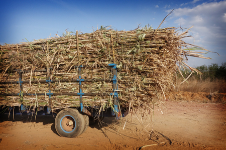 overfilled: sugarcane truck with full cargo