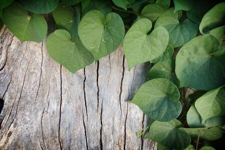 ウッド フェンスの背景の上の緑の草や葉植物 写真素材 - 71044736
