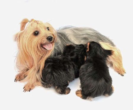 mother dog with puppy  photo