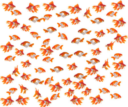 Goldfish in front of a white background Stock Photo - 9726712