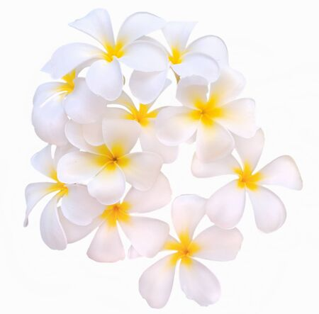 Frangipani tropical flowers from deciduous tree photo