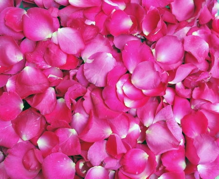 petals pink roses background Stock Photo - 9961133