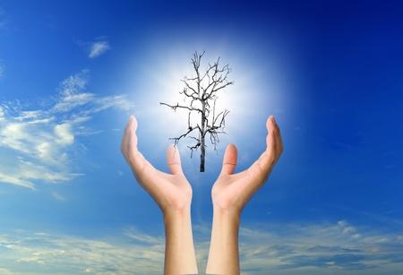 renewabel: Sun and Dead trees in the hands